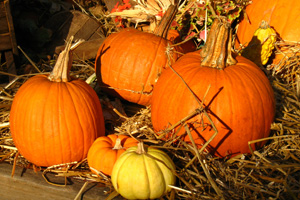 Pumpkins in Boulder City, Nevada
