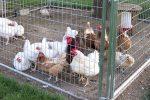 Chicken Coops in Boulder City, Nevada