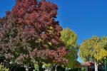 Fan Photo by Larry Hunt in Boulder City, Nevada