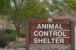 Animal Control in Boulder City, Nevada