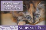 Cattitude - Adoptable Pets in Boulder City, Nevada