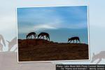 NPS Plants Animals Photo Contest Wendy Jensen