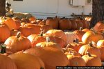 Pumpkin Patch in Boulder City, Nevada