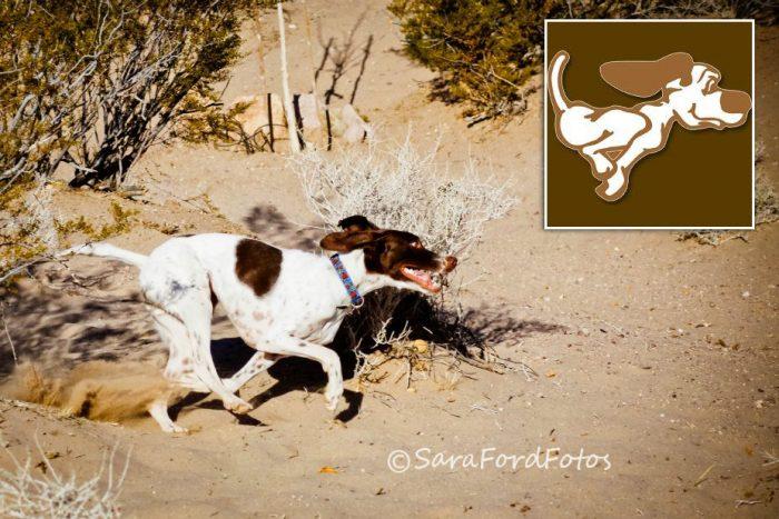 Fan Photo: See Spot Run by Sara Ford Fotos