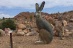 Jackrabbit Bootleg Canyon Boulder City, NV