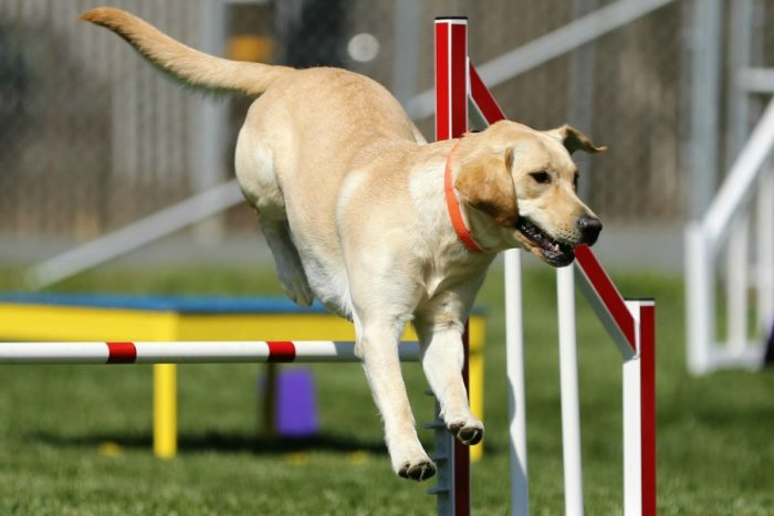 Dog Agility Trials At Veterans Memorial Park