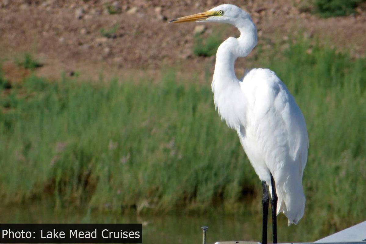 Fan Photo Lake Mead Cruises Boulder City, NV