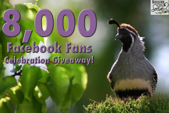 8,000 Facebook Fans Celebration Giveaway!