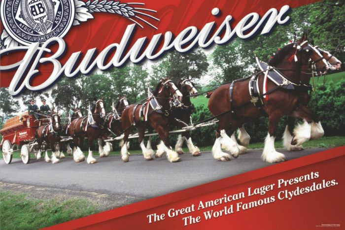 Clydesdales Coming To Boulder City, Nevada