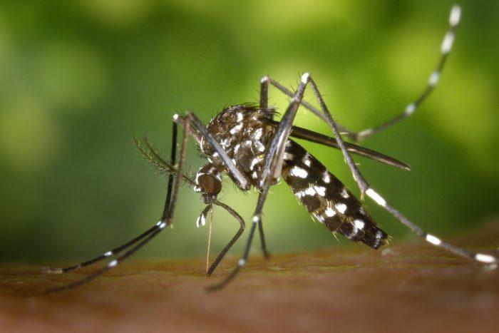 West Nile Virus Warning Boulder City, Nevada