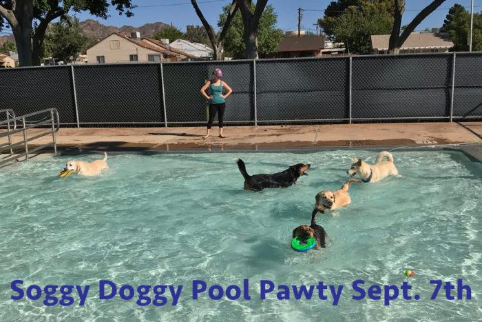 Soggy Doggy 2019 Boulder City Nevada