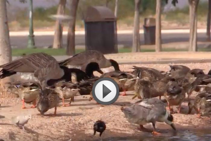Dont Feed Wild Life Boulder City, Nevada