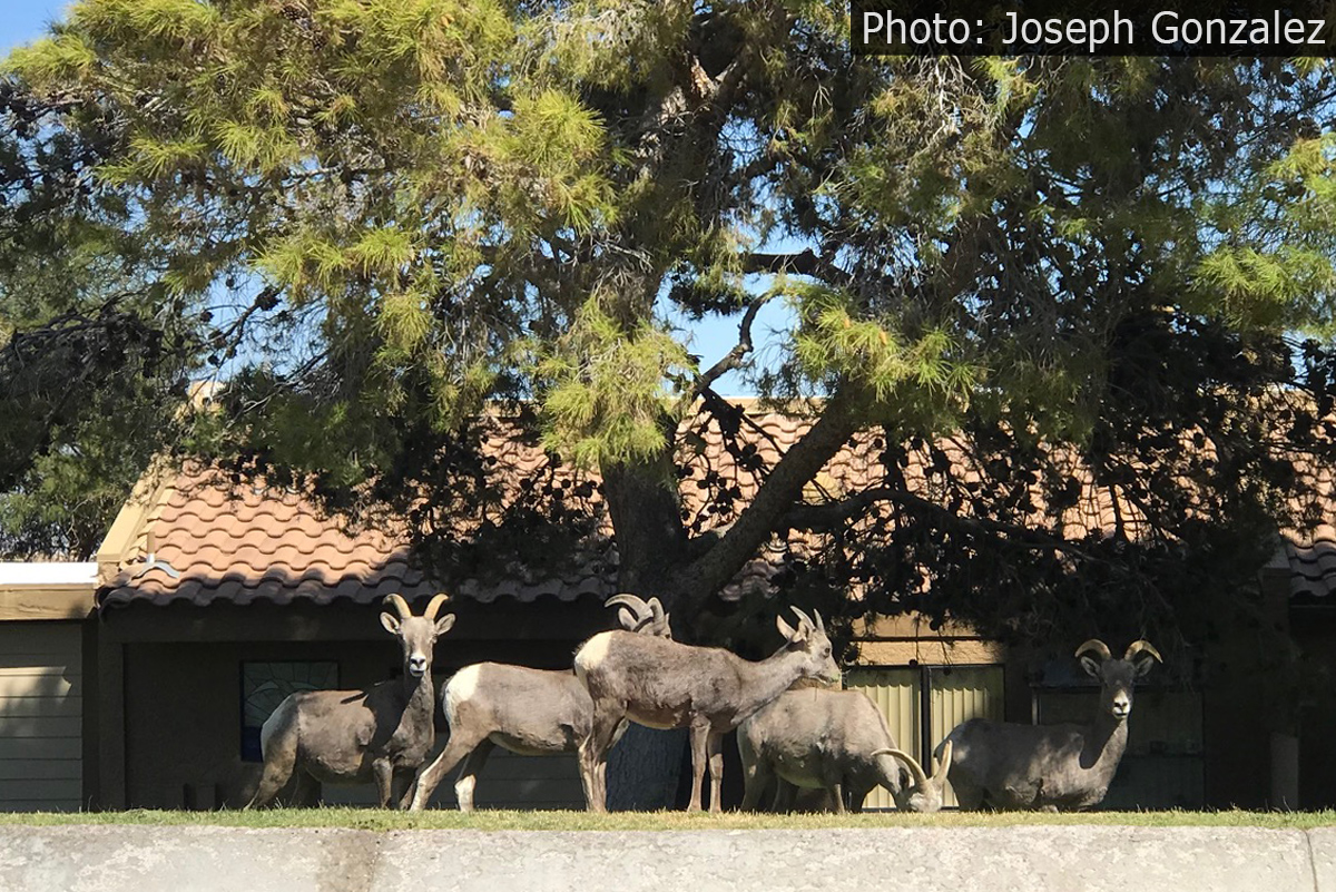 Fan Photo Joseph Gonzalez Boulder City, Nevada