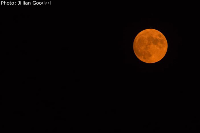 Fan Photo Jillian Goodart Blood Moon Boulder City, NV