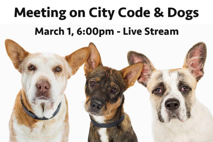 CityAnimalCodeMeeting - Boulder City, NV
