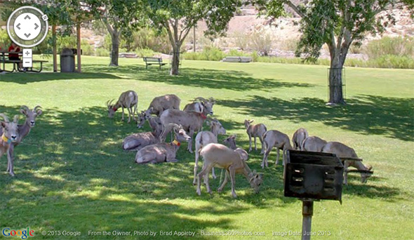 360 Tour of Big Horn Sheep in Boulder City, Nevada