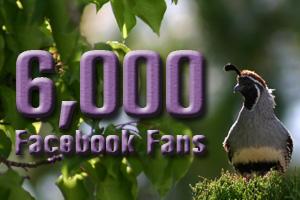 6000 Facebook Fans of Boulder City Social