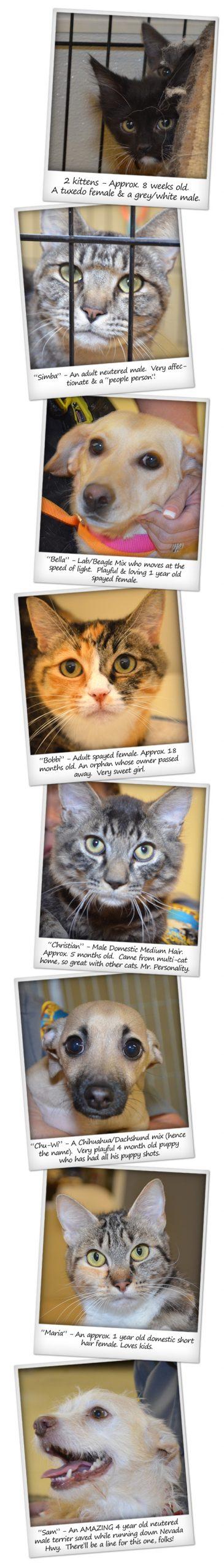 Adoptable Pets in Boulder City, Nevada