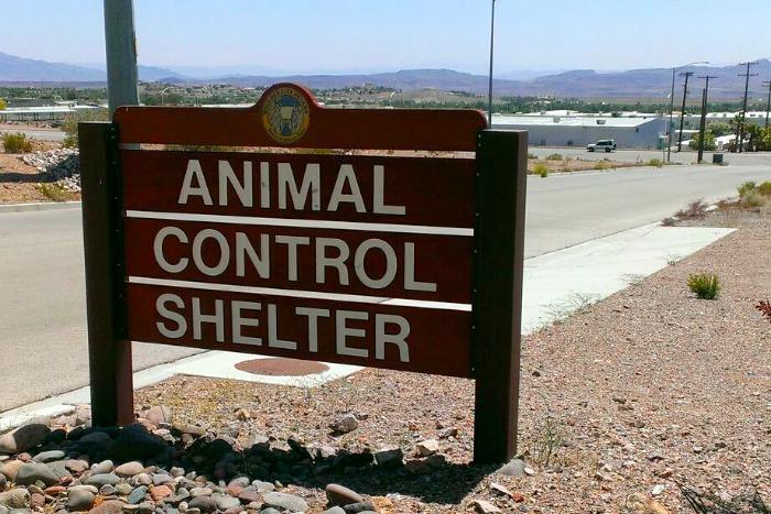 Annimal Control Shelter Boulder City, Nevada