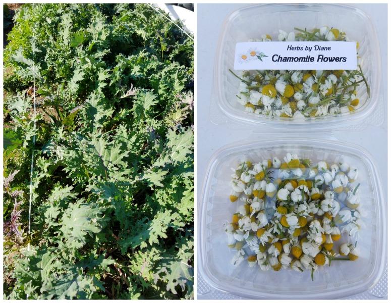 Herbs By Diane Boulder City, Nevada