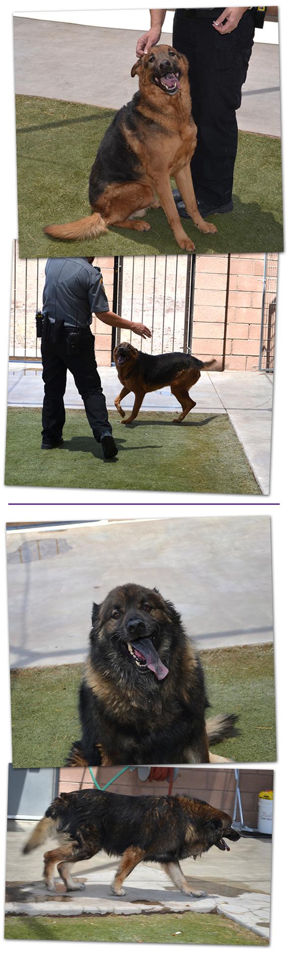 Adoptable Pet in Boulder City, NV - June 2014