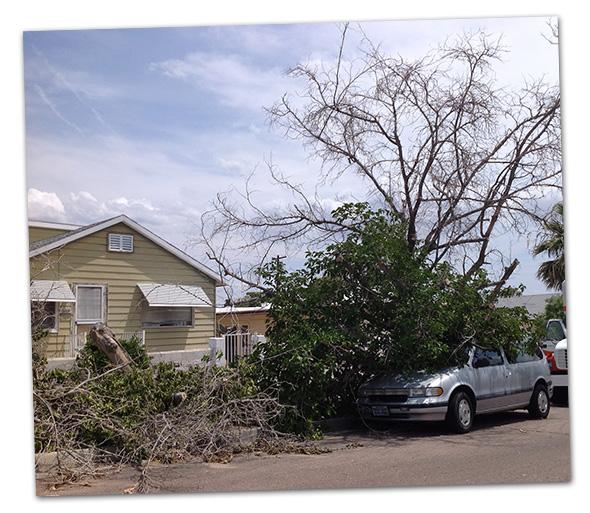 Tree on Car on Avenue M in Boulder City, NV