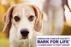 Bark for Life in Boulder City, Nevada