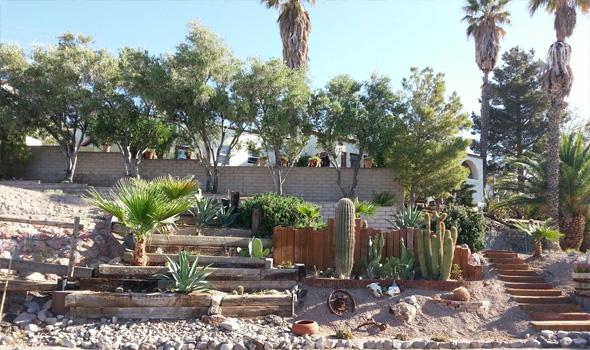 Cactus Garden by Jean Wilson in Boulder City, Nevada