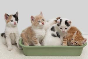 Kittens in Boulder City, Nevada