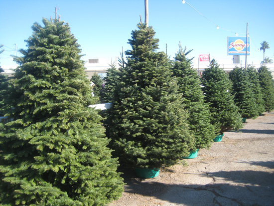 Christmas Tree Lot in Boulder City, NV