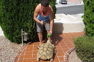 Turtle Going Home in Boulder City, Nevada