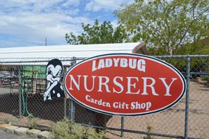 Ladybug Nursery in Boulder City, Nevadda
