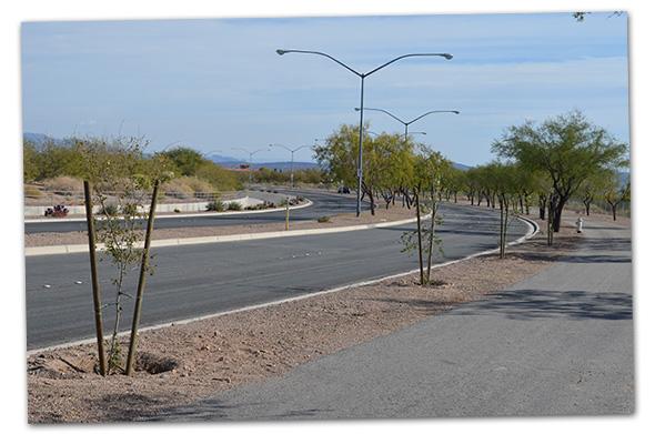 New Trees on Veterans' Memorial Drive in Boulder City, NV