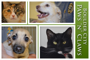 Boulder City Paws n Claws in Boulder City, Nevada