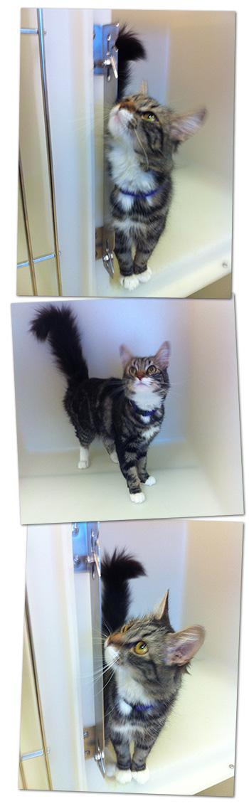 Pet Adoptions in Boulder City, Nevada