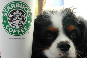 Starbucks and Josie in Boulder City, NV