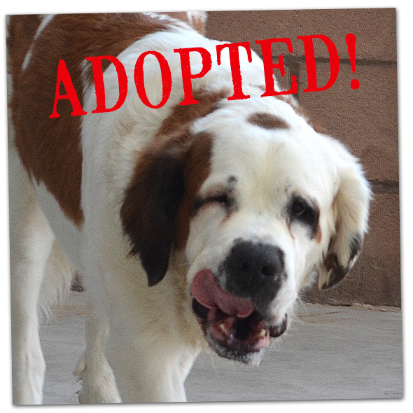 Tink Adopted in Boulder City, Nevada