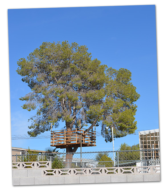 Tree House in Boulder City, Nevada