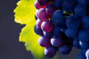 Wne Grapes
