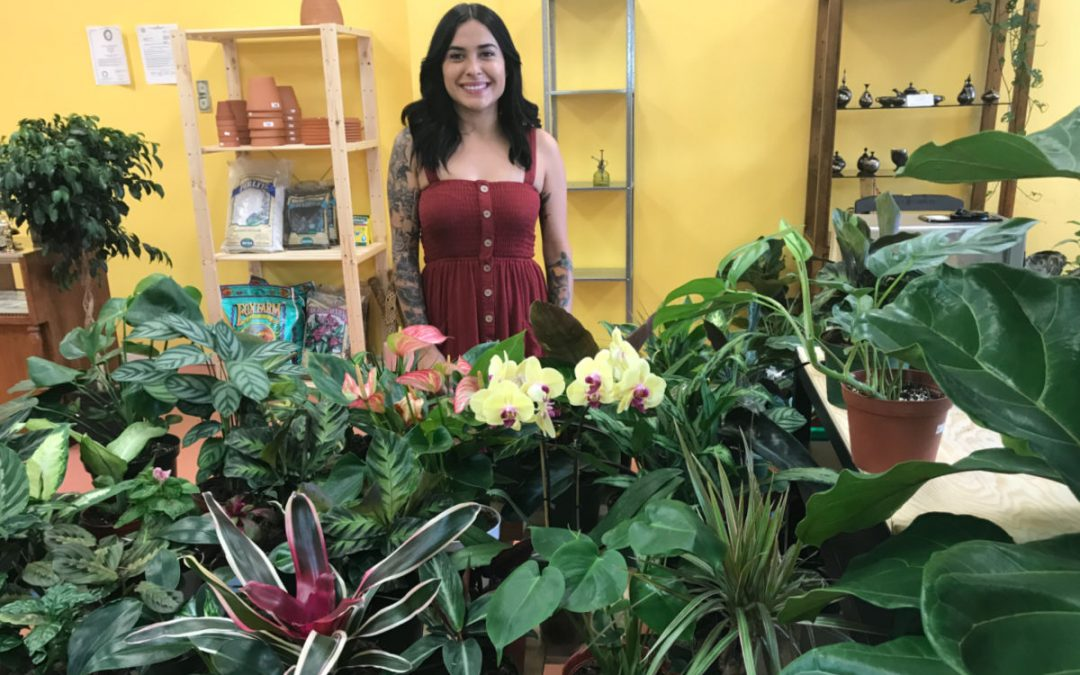 New Business: Iron Rose Plants + Vintage Store