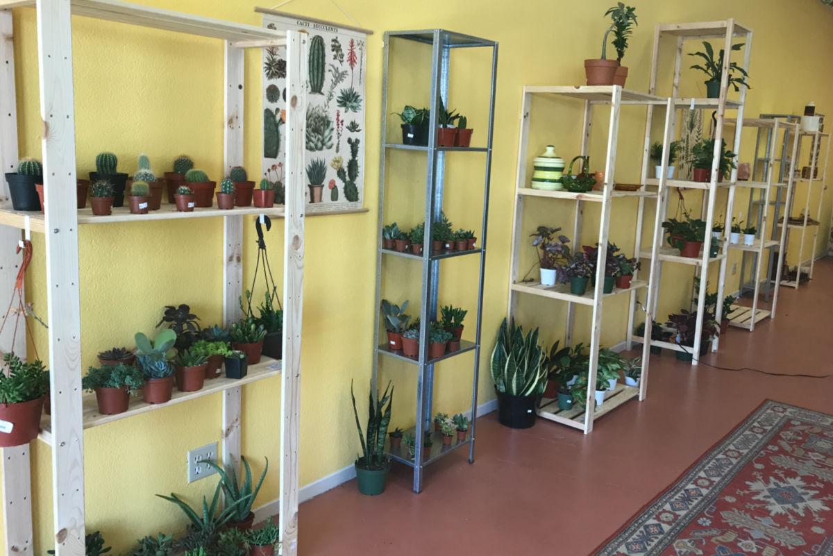 IronPlantStore