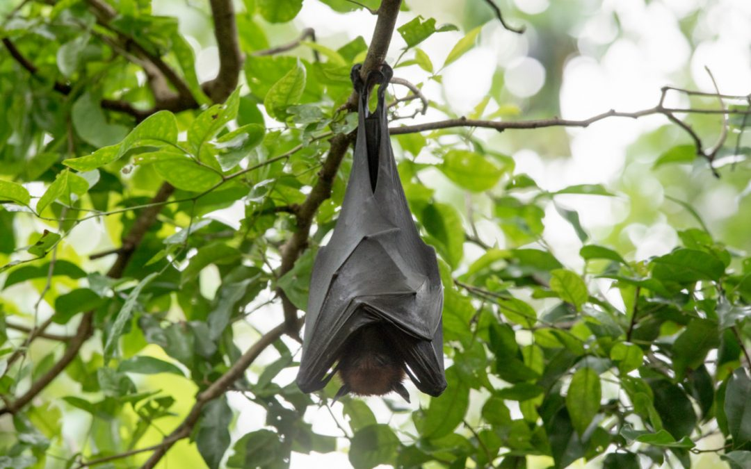Nevada Department of Wildlife Bat Walk-Abouts