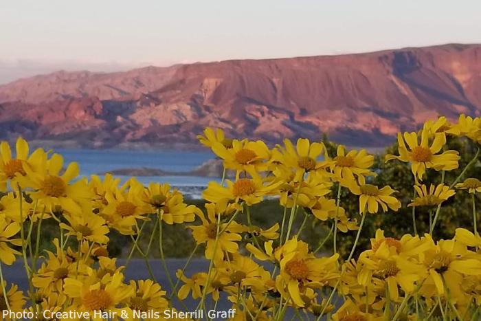 Fan Photo: Desert Wildflowers by Sherrill Graff