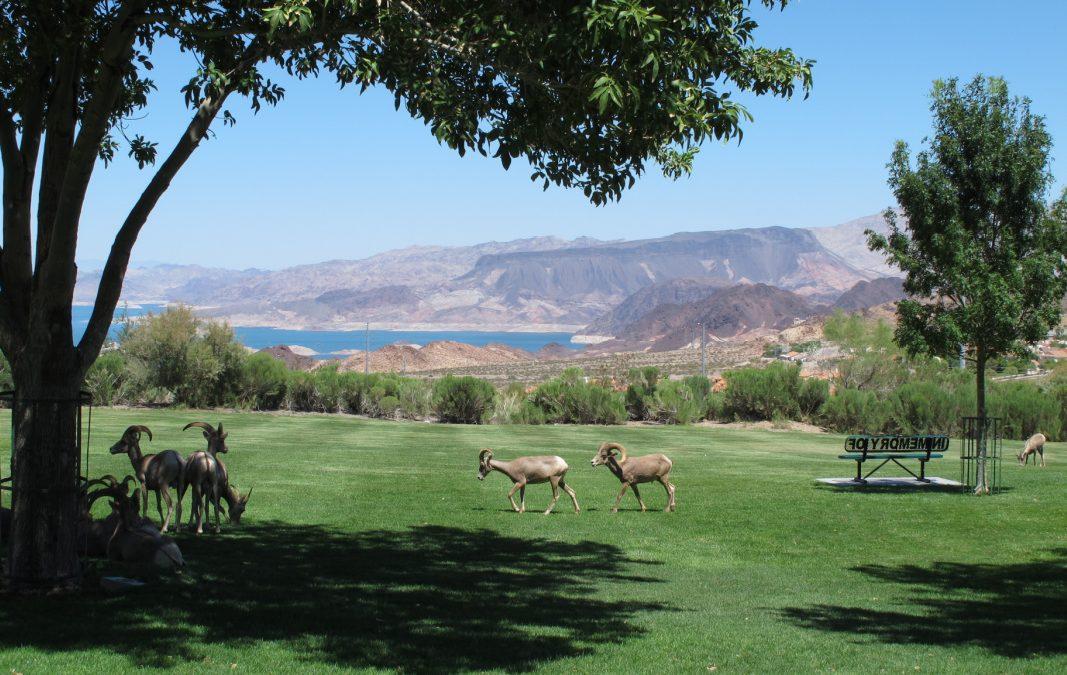 City Requests Input for Landscape Management Plan Update