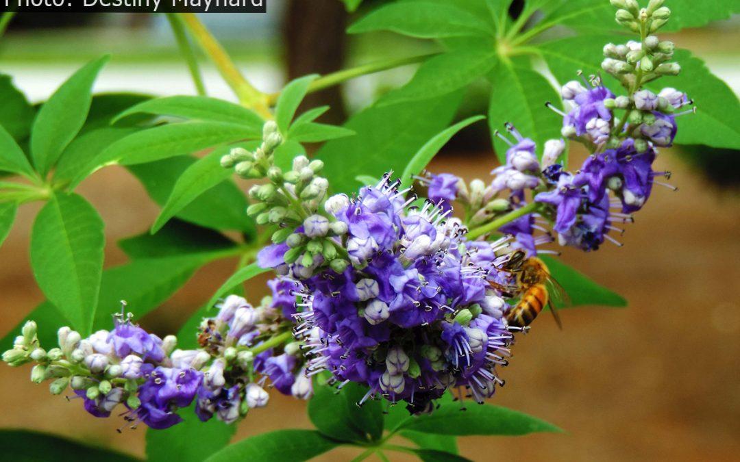 Fan Photo: Pollinator About Town by Destiny Maynard